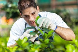 landscaping_services
