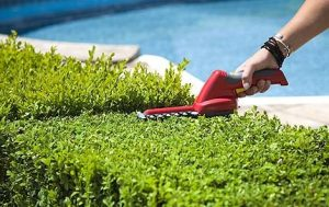 landscaping_services3